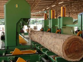 l-italienne-sif-inter-veut-investir-2-5-milliards-de-fcfa-dans-une-unite-de-transformation-de-bois-au-cameroun