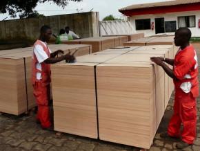 la-baisse-des-exportations-camerounaises-de-placages-vers-les-usa-atteint-le-pic-de-88-en-aout-2019