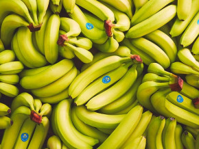 les-exportations-de-bananes-au-cameroun-chutent-de-pres-de-19-500-tonnes-sur-les-9-premiers-mois-de-l-annee-2020