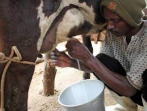 le-cameroun-cherche-des-fournisseurs-d-equipements-pour-3-unites-de-transformation-du-lait-dans-le-nord-ouest