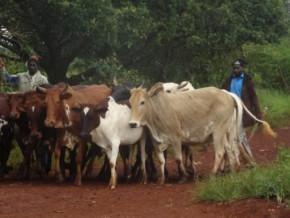 pres-de-195-millions-fcfa-pour-les-acteurs-agropastoraux-de-la-region-camerounaise-de-l-adamaoua