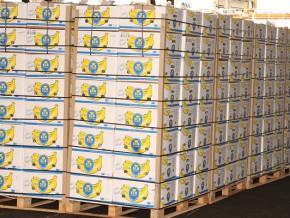 les-exportations-camerounaises-de-la-banane-augmentent-de-764-tonnes-pour-se-situer-a-12-459-tonnes-en-juillet-2021