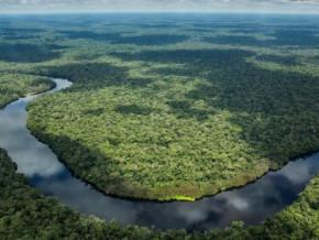 cameroun-le-fonds-pour-l-environnement-mondial-octroie-13-millions-pour-la-preservation-du-bassin-du-congo